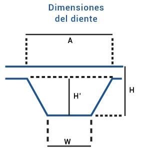 Dimensiones del diente
